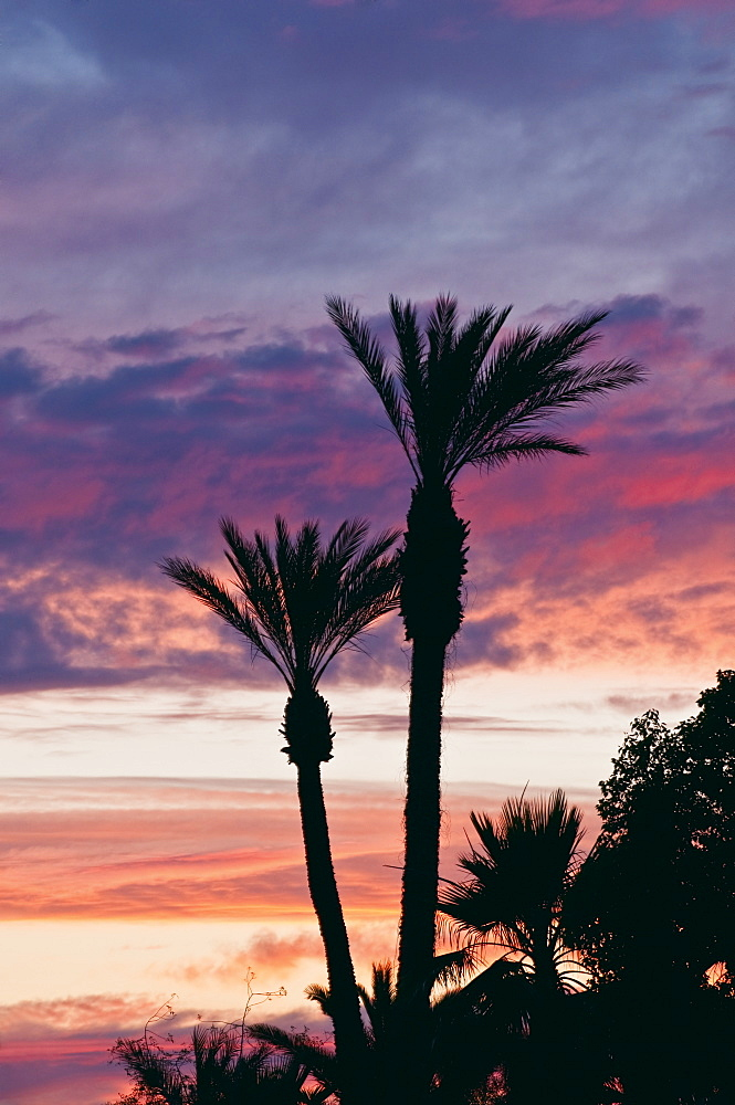 Palm trees by power lines