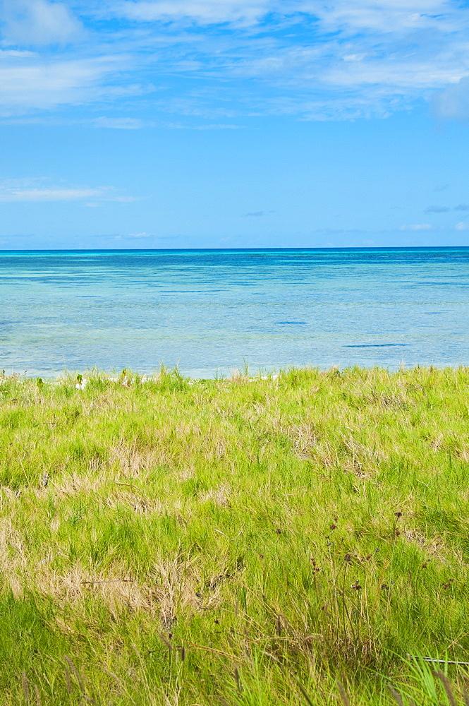 Aruba, grassy beach and sea