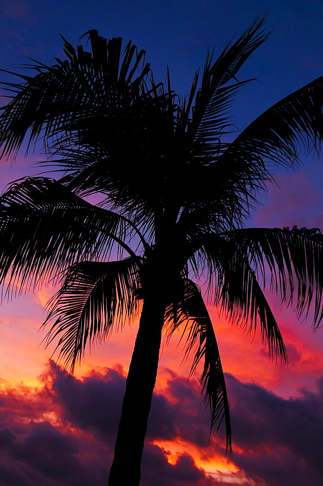 Aruba, silhouette of palm tree at sunset