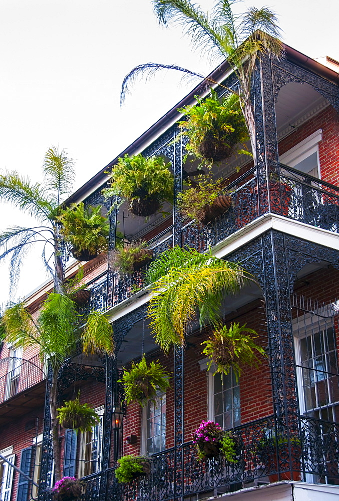 Balcony with potted plants, USA, Louisiana, New Orleans