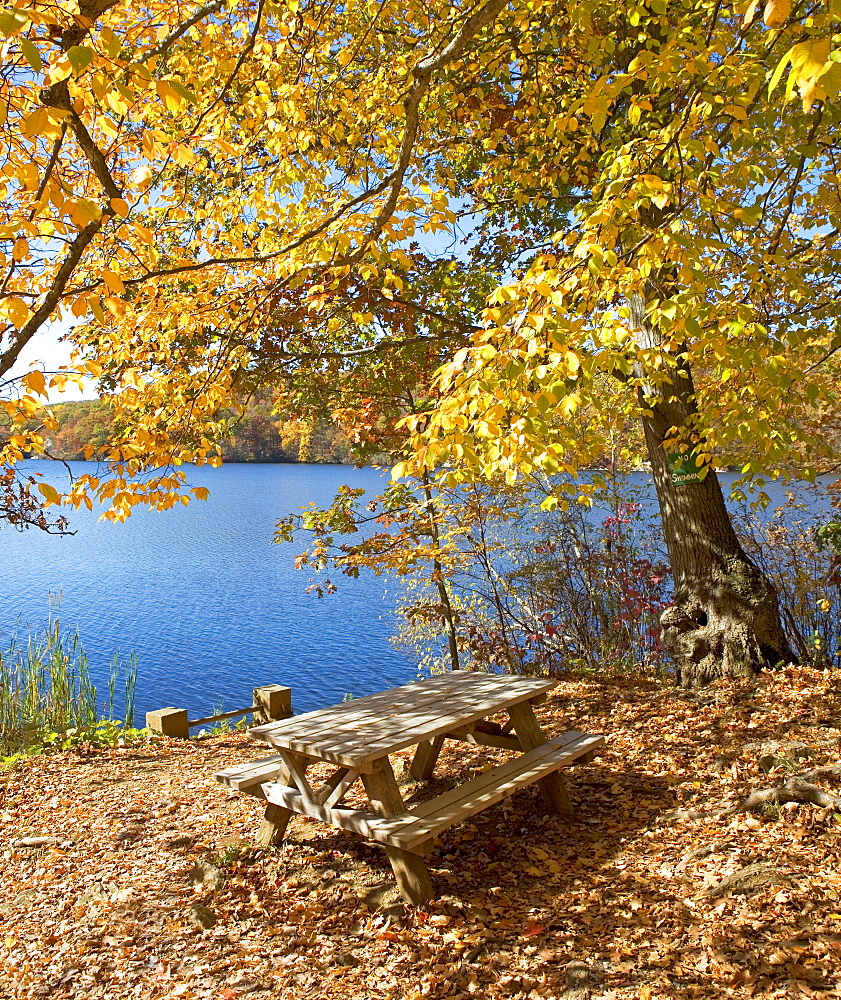 Picnic bench in autumn leaves at edge of lake