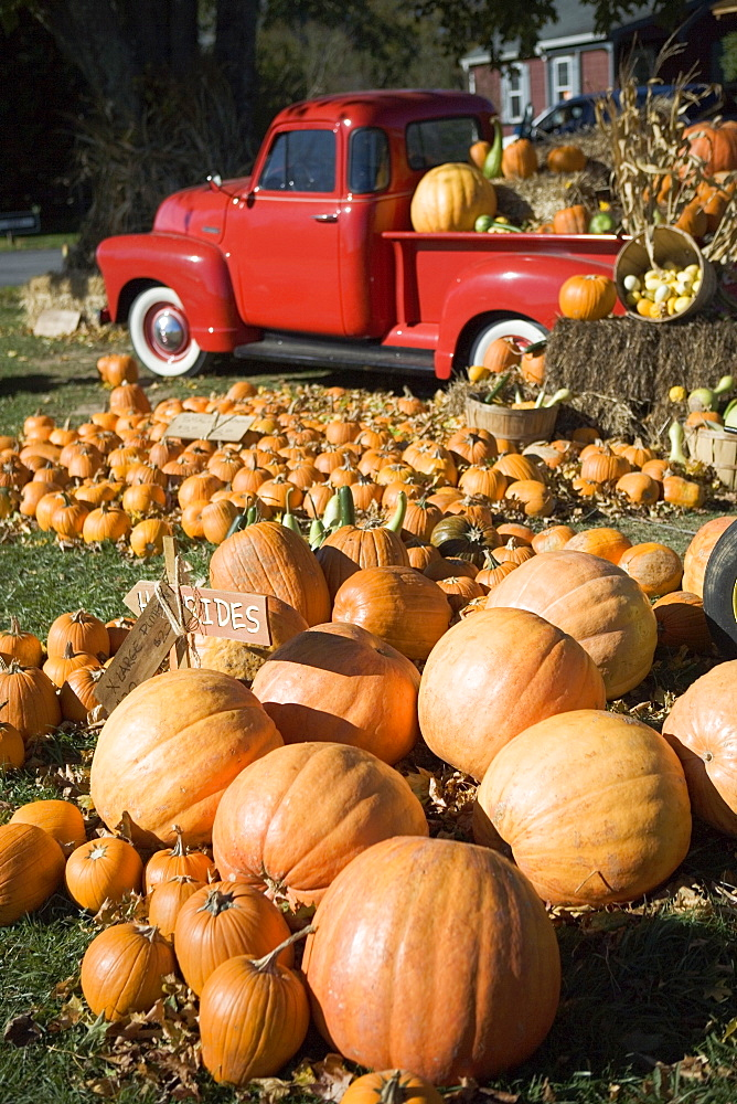 USA, New York, Peconic, pumpkin farm with pickup truck