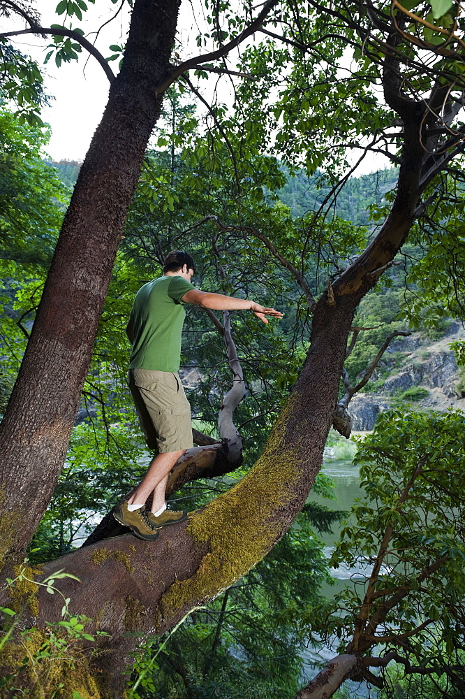 Man walking out on large tree branch