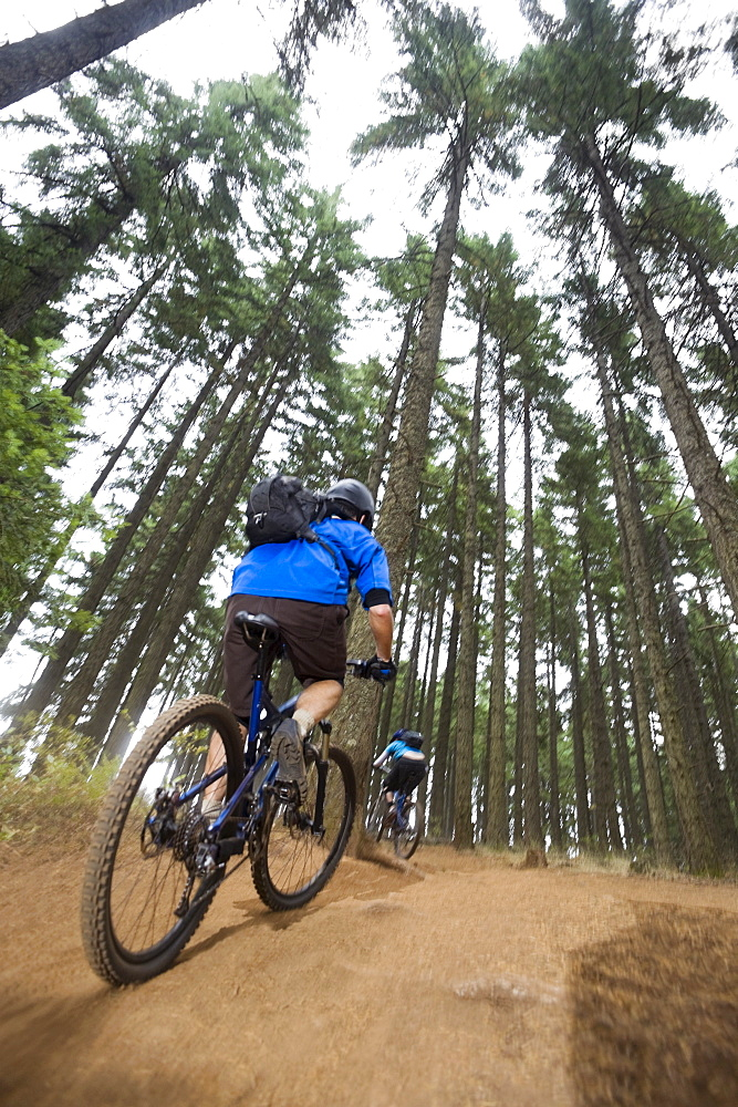 Mountain bikers riding in forest