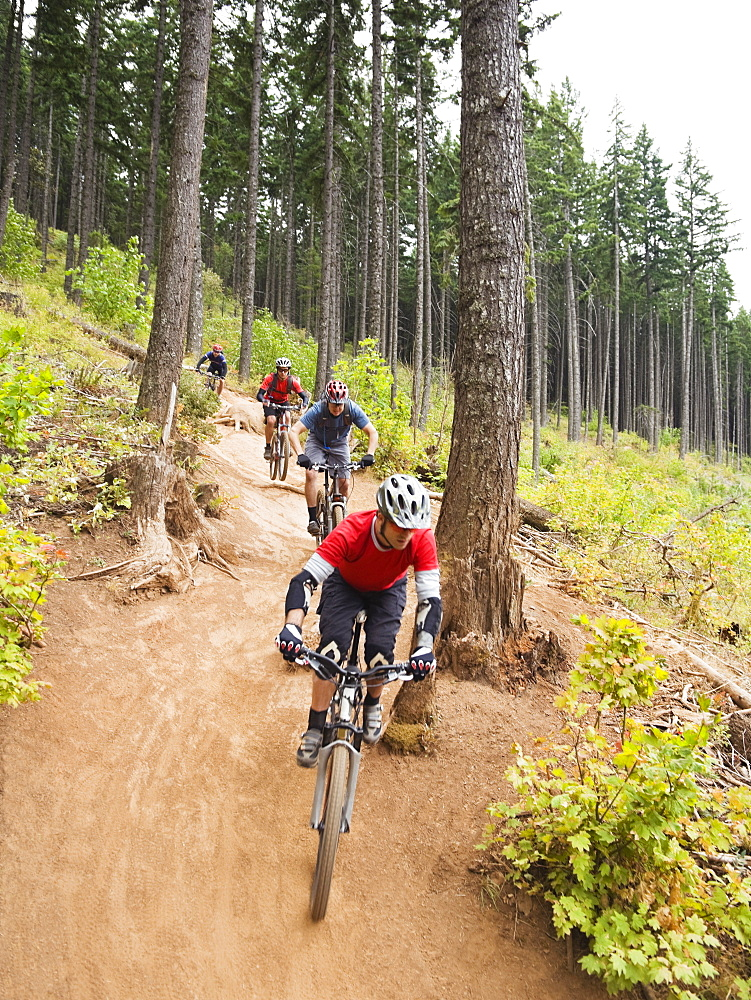 Mountain bikers riding on forest trail