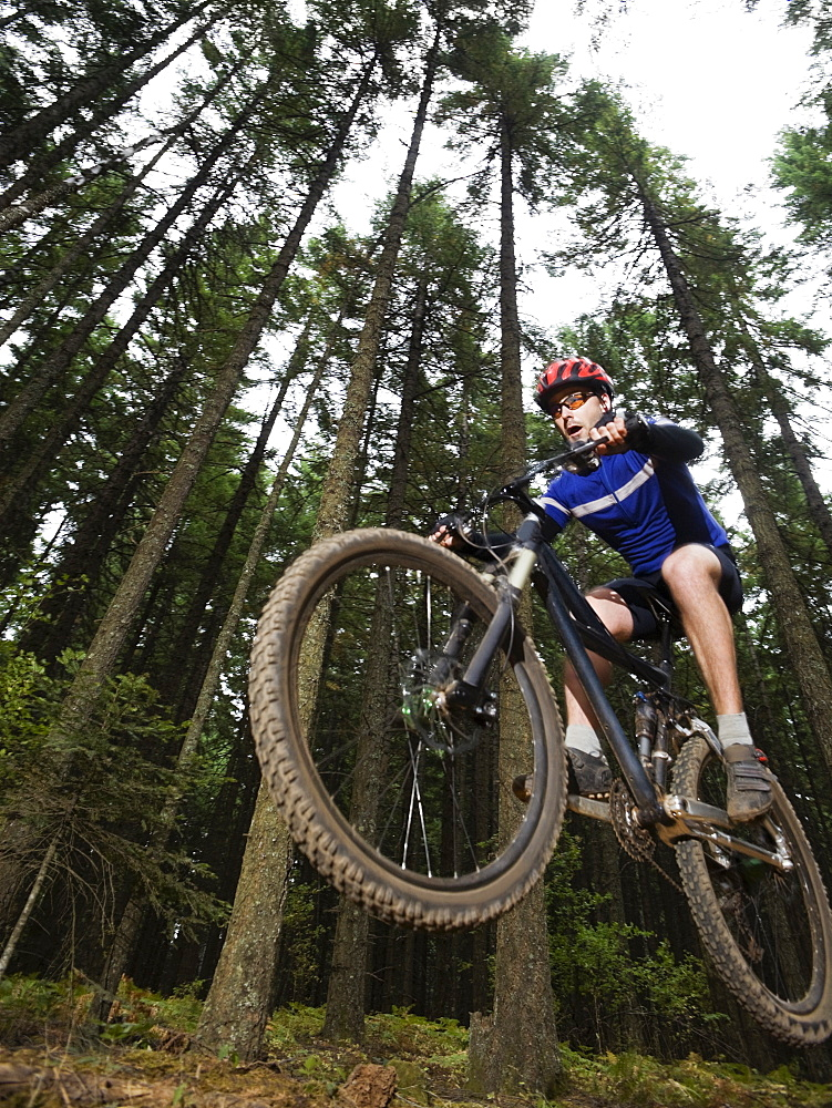 Mountain biker in mid-air on forest trail