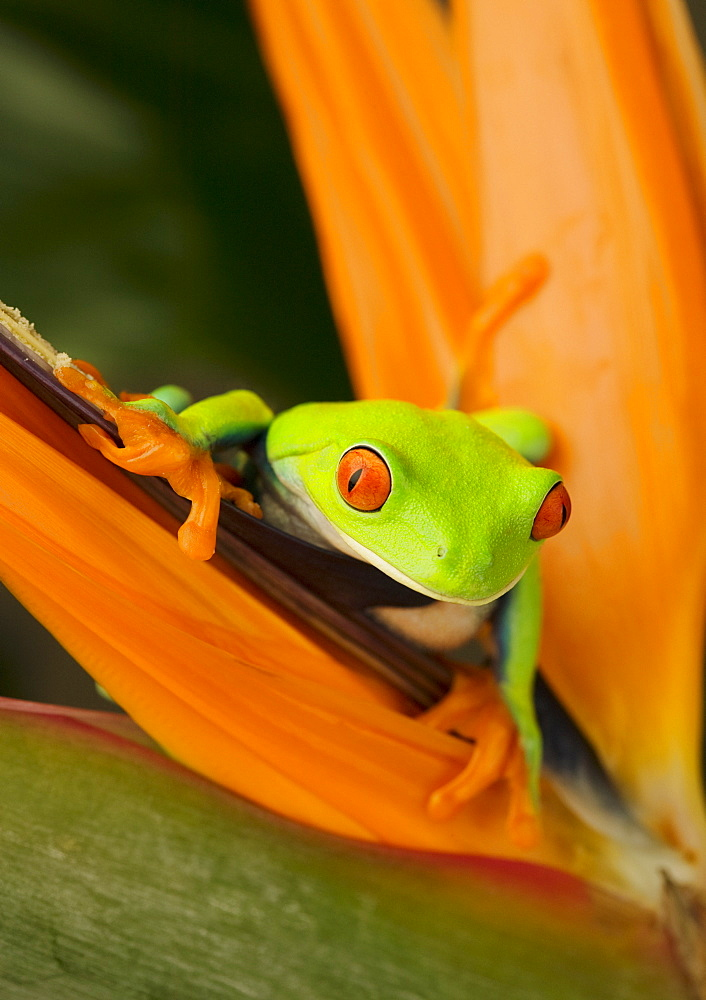 Tree frog on flower