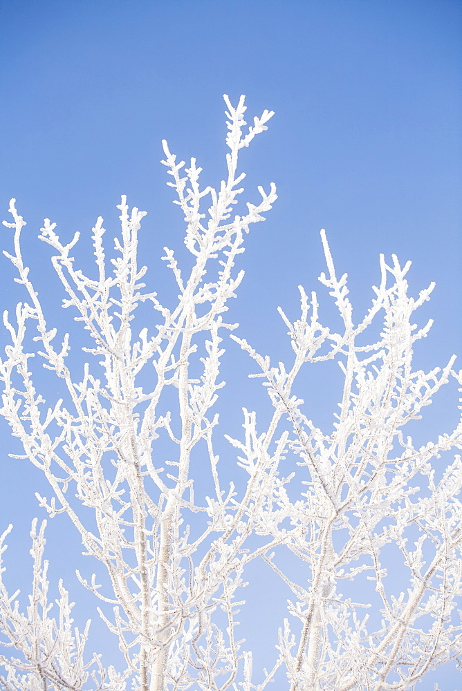 Tree in winter against clear sky