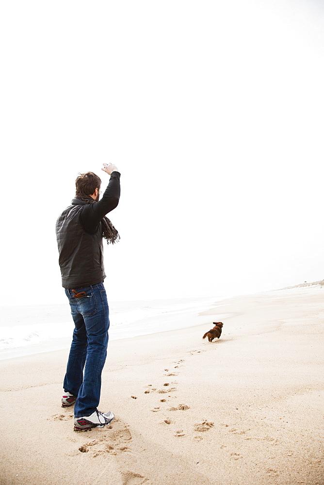 Dachshund fetching on beach
