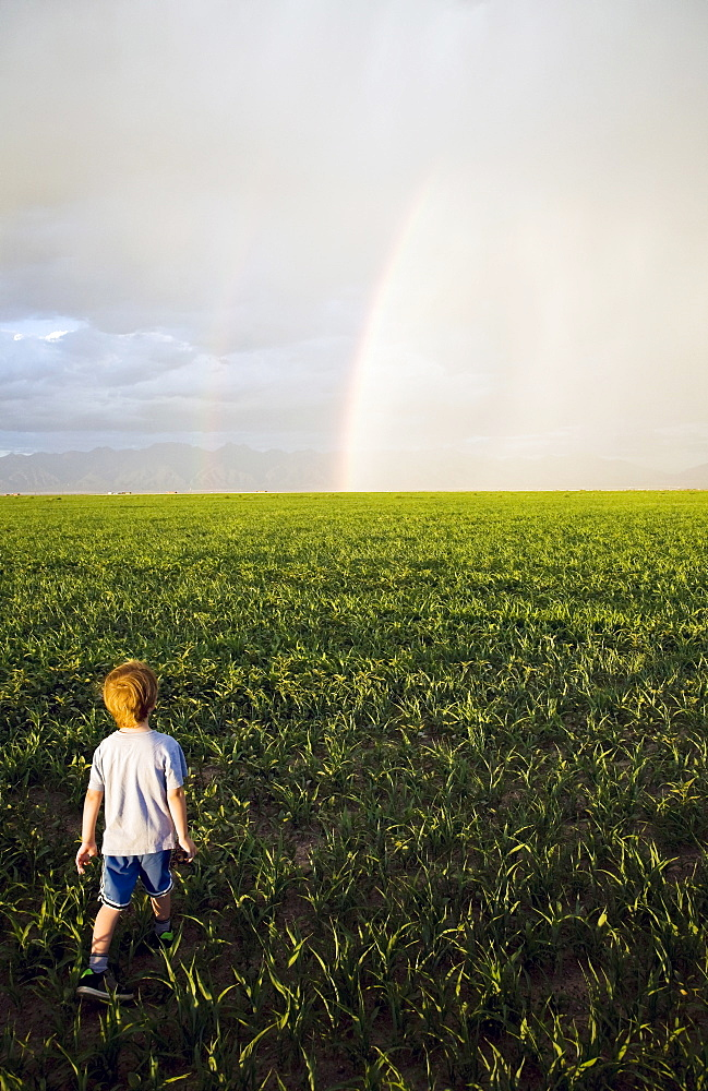 boy (2-3) in field looking at rainbow, Colorado, USA