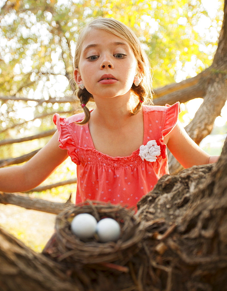 Little girl (6-7) looking at bird's nest, Lehi, Utah