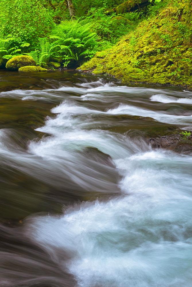 Long exposure of Tanner Creek, Tanner Creek, Oregon, USA