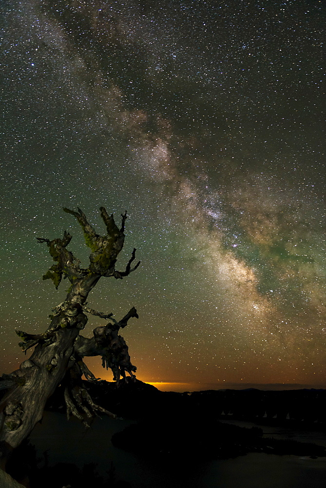 Milky Way and old tree at night, Crater Lake National Park