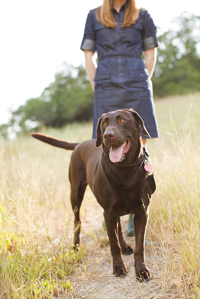 Chocolate Lab, USA, Utah, Salt Lake City