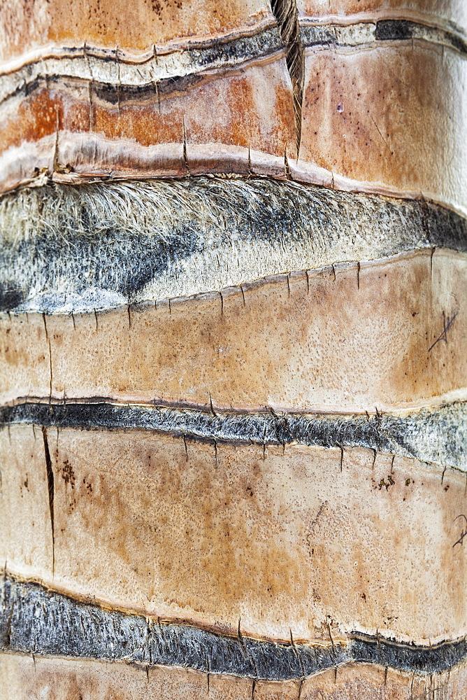 Palm tree trunk, Mexico, Quintana Roo, Yucatan Peninsula, Isla Mujeres