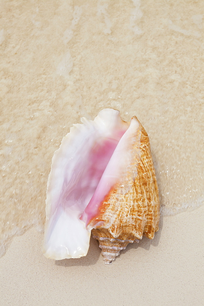 Seashell on beach, Mexico, Quintana Roo, Yucatan Peninsula, Cancun