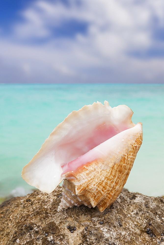 Mexico, Quintana Roo, Yucatan Peninsula, Cancun, Seashell on beach, Mexico, Quintana Roo, Yucatan Peninsula, Cancun