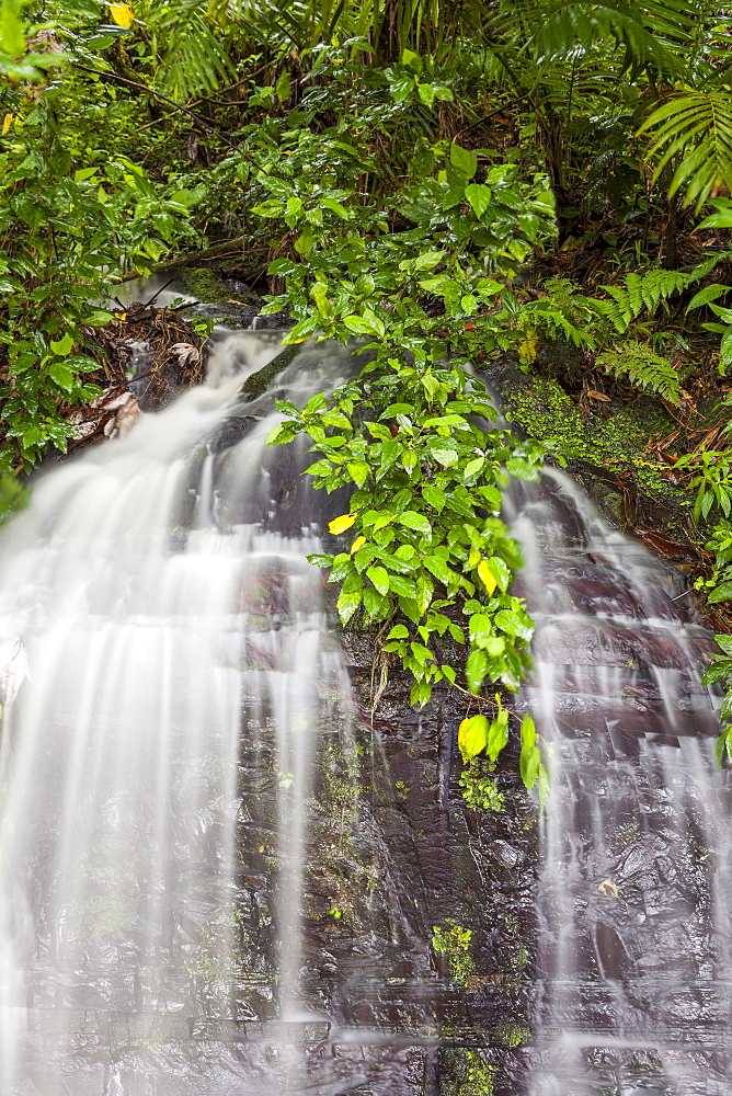 Scenic waterfall, El Yunque, Puerto Rico