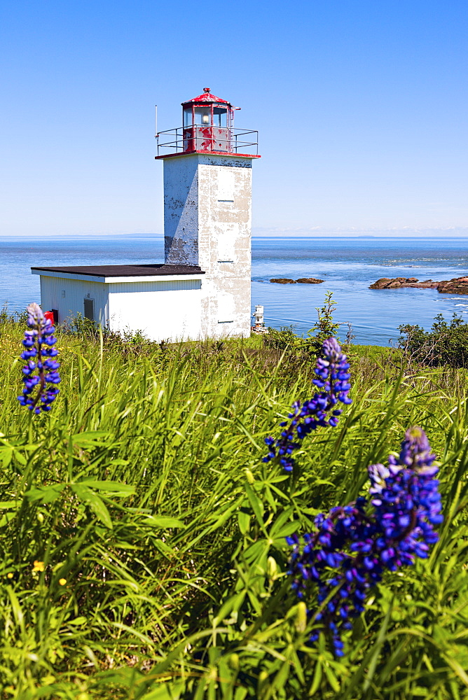 Quaco Head Lighthouse and blue flowers on foreground, New Brunswick, Canada