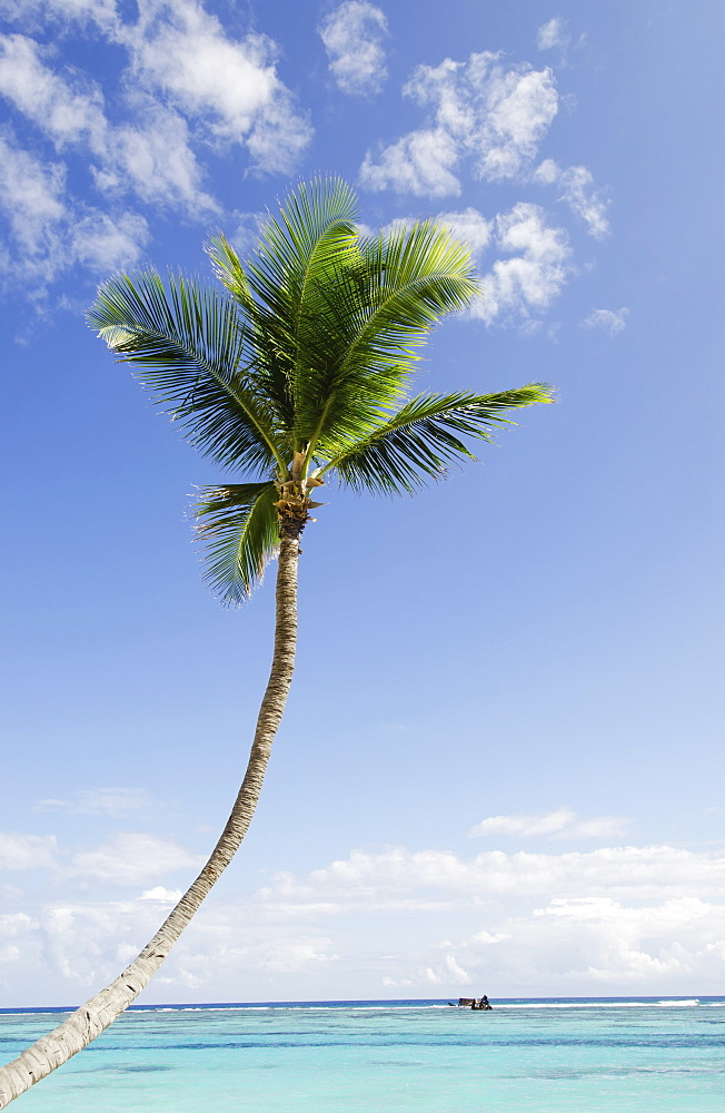 Palm tree on sunny day, sea in background, Punta Cana, Dominican Republic