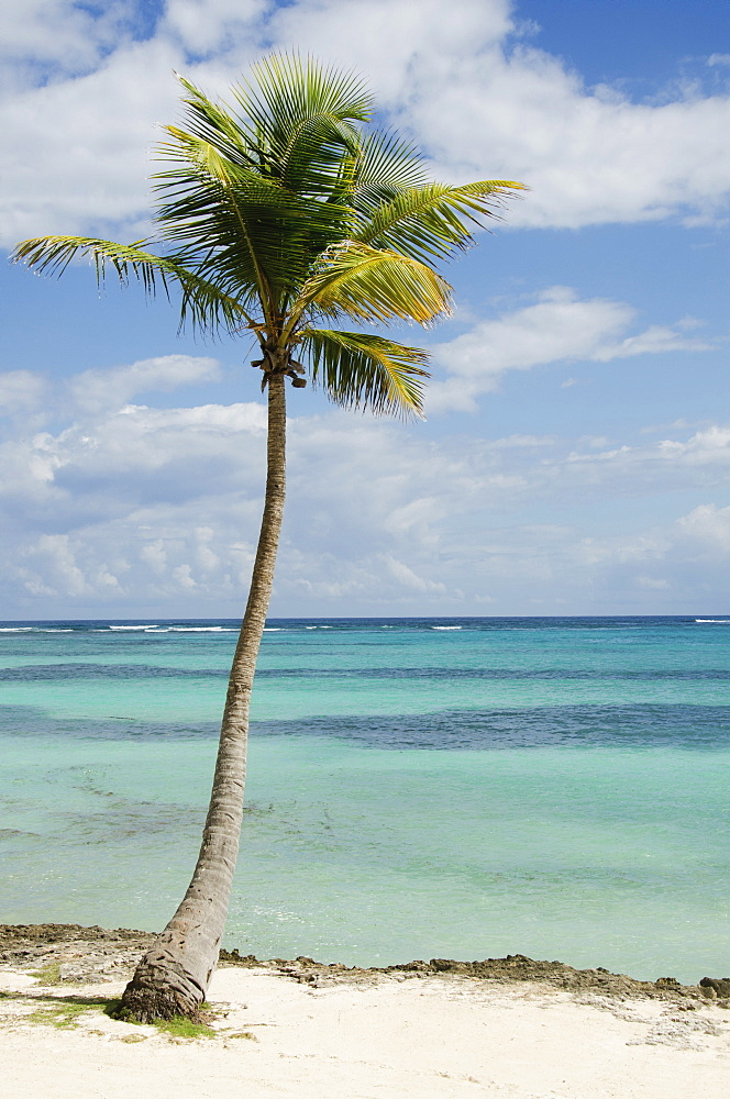 Palm tree on beach, Punta Cana, Dominican Republic