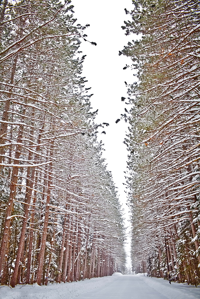 View of road in snowy forest, USA, New York State - 1178-25111