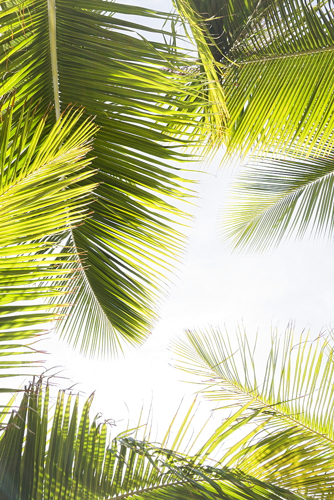 Palm leaves against clear sky
