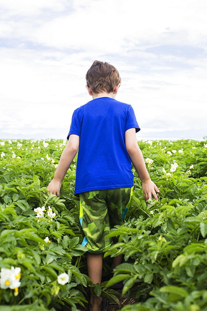 Boy (6-7) walking in field
