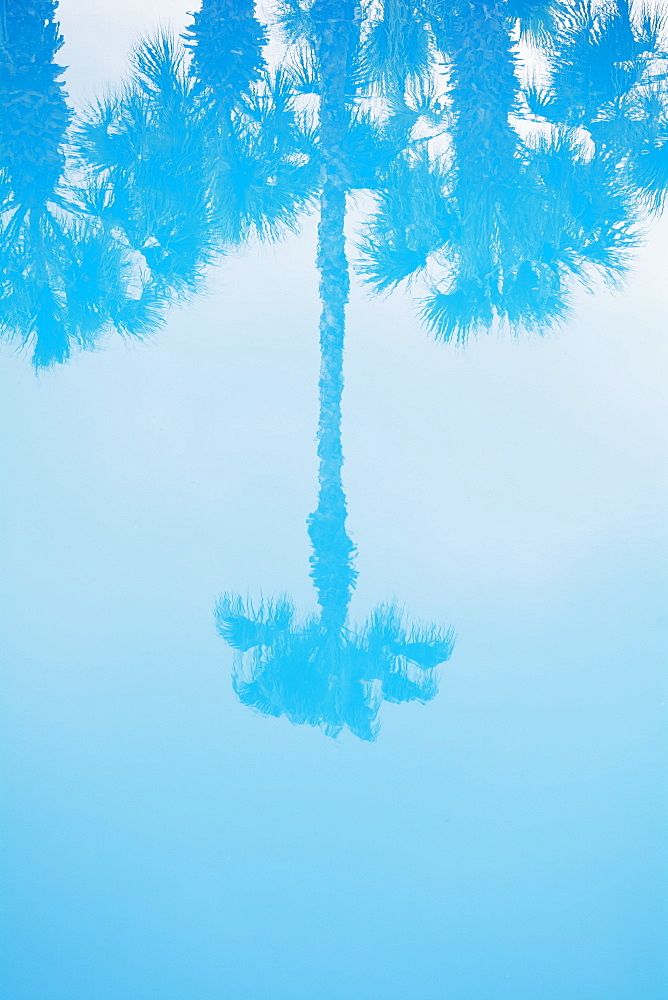 Palm tree reflected in water