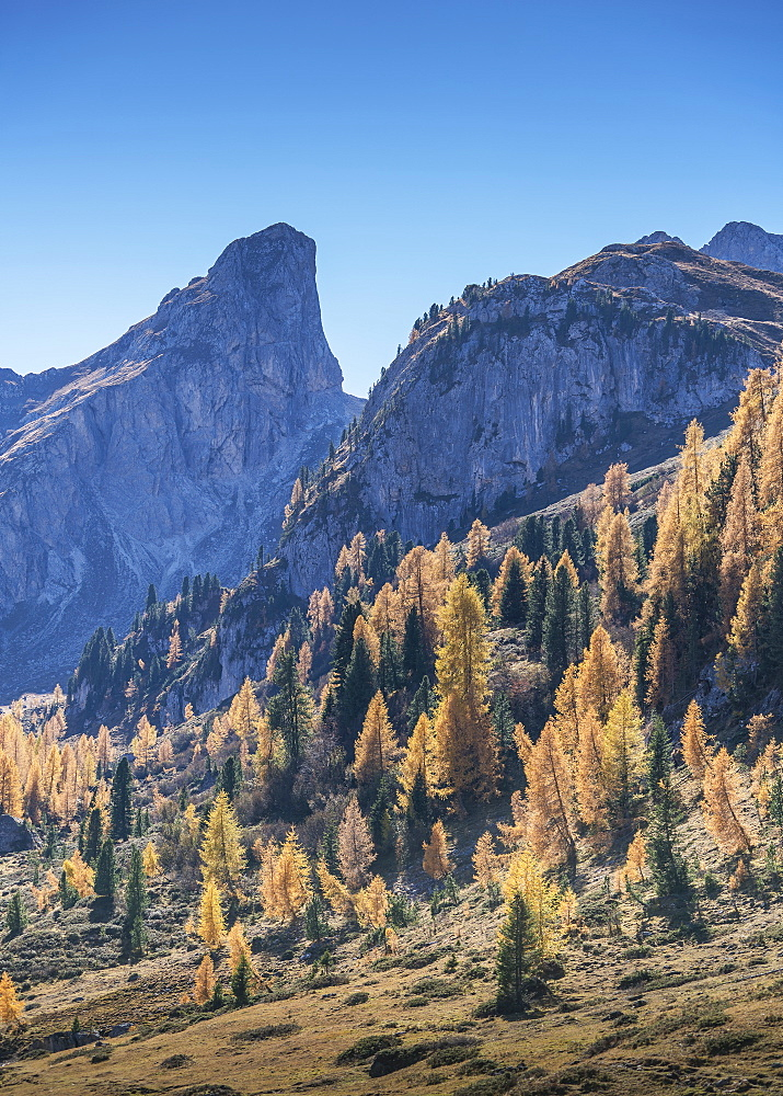 Pine trees and mountain in the Dolomites, South Tyrol, Italy