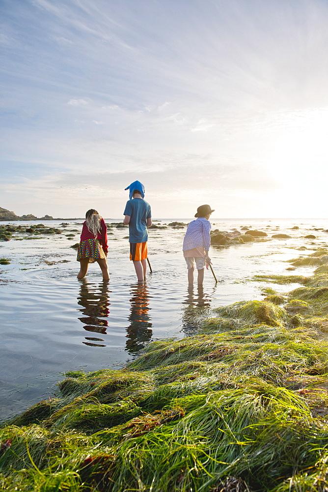 Children exploring tide pools in La Jolla, California