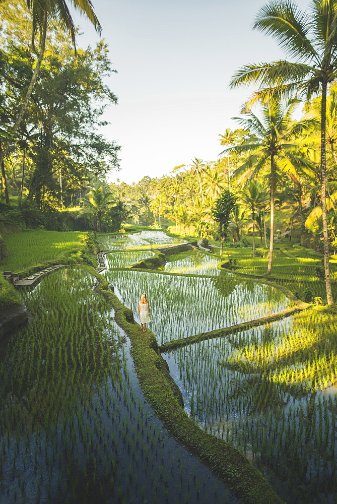 Woman on terraced rice paddies in Bali, Indonesia