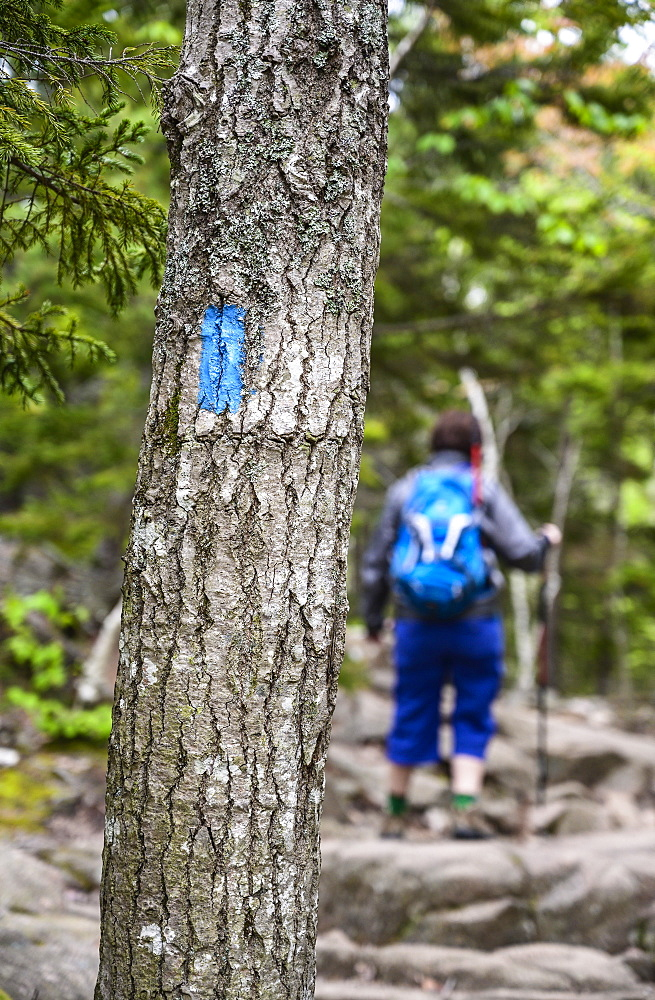 Woman hiking behind marking on tree trunk