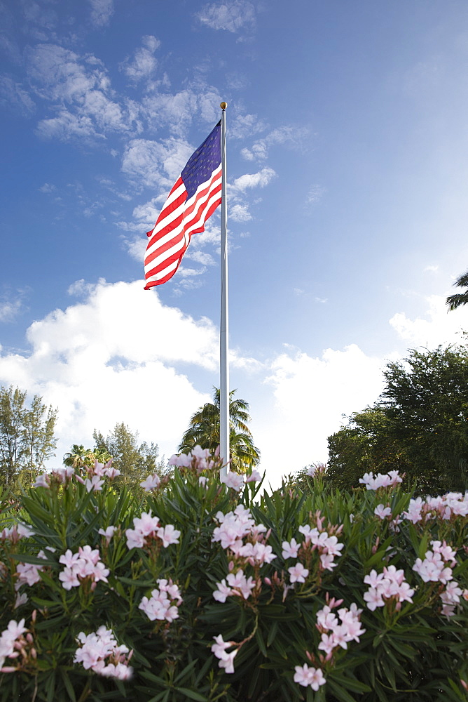 American flag in bush with flowers - 1178-27997