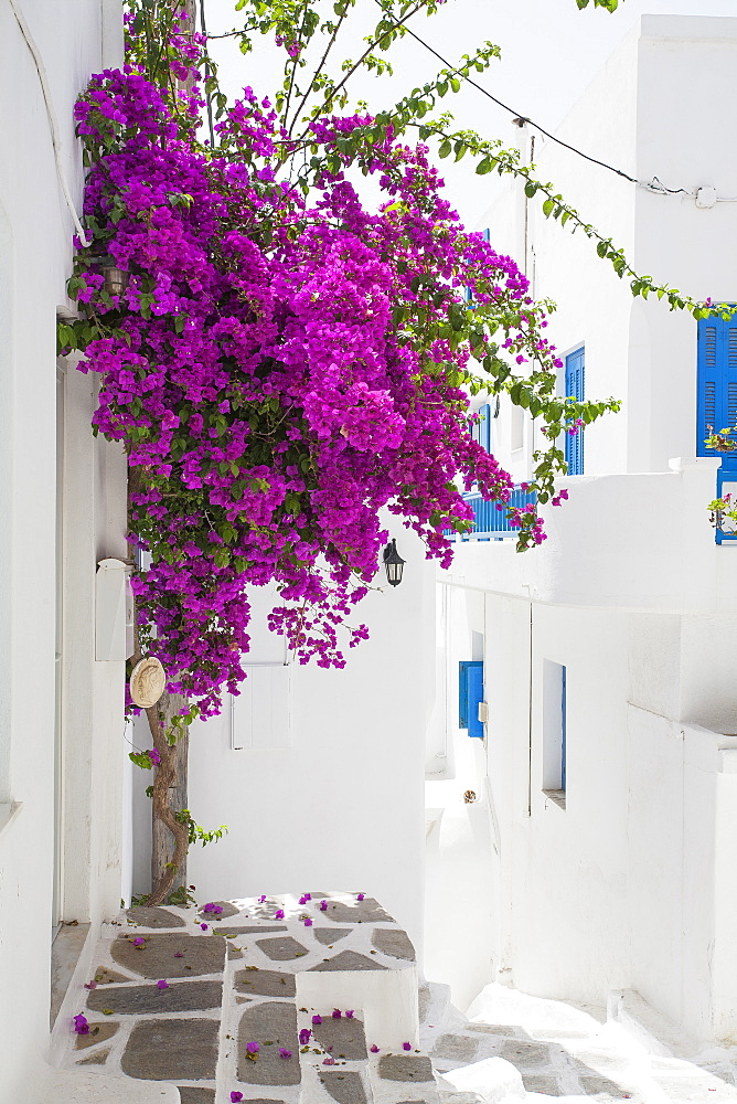 Purple flowers by building in Mykonos, Greece