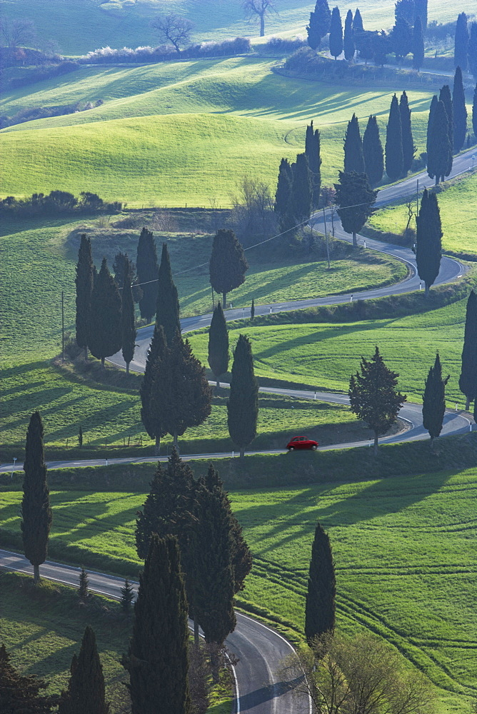 Trees along winding road in Tuscany, Italy
