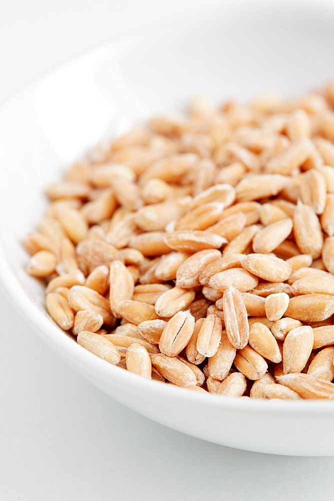 Farro seeds in bowl