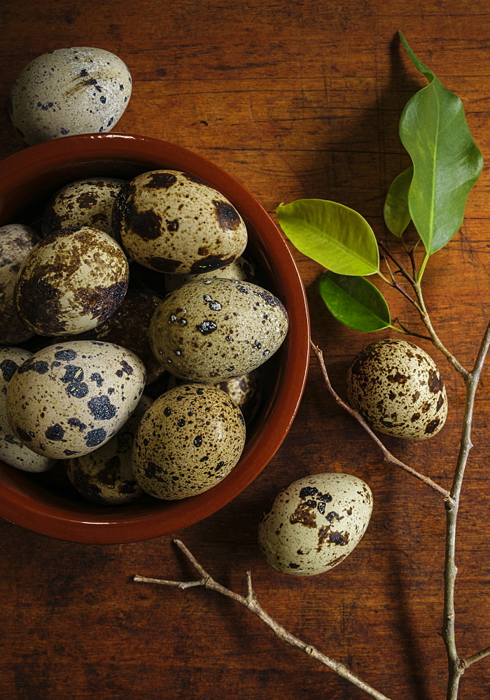 Bird eggs in bowl by branch