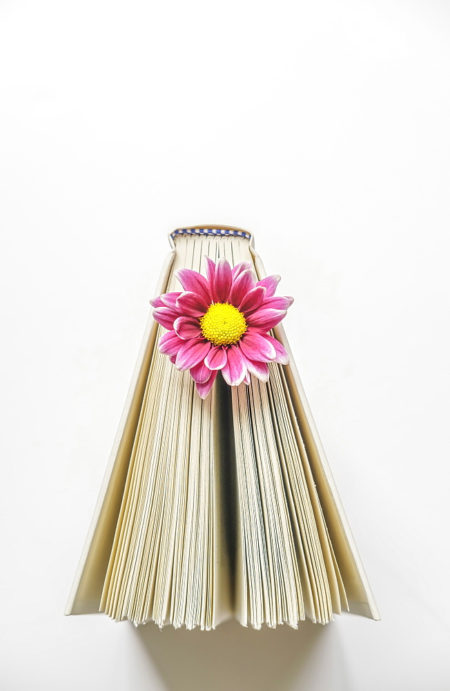 Pink flower in book