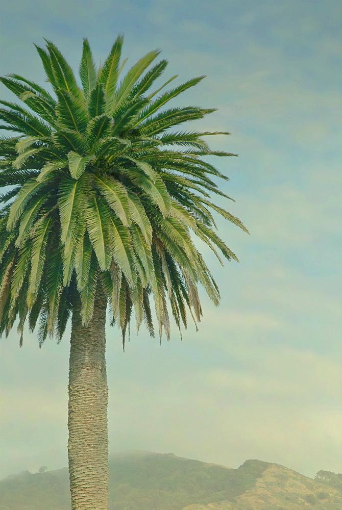 USA, Palm tree near mountains