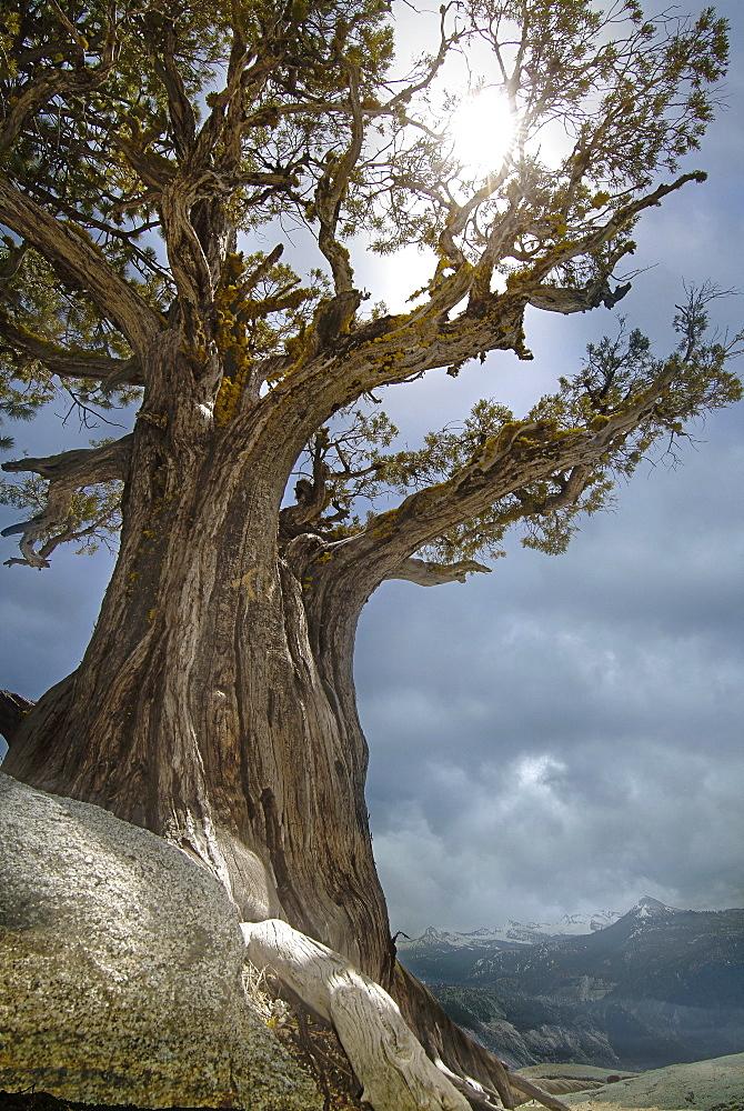 USA, Arizona, Sedona, Sun shining through juniper tree