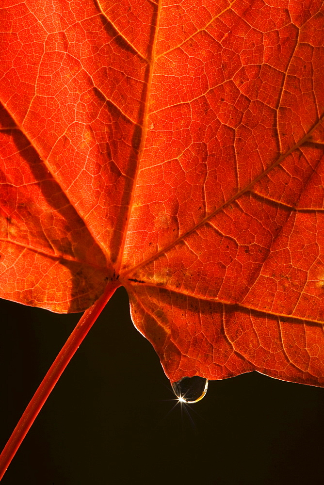 Closeup of fall leaf