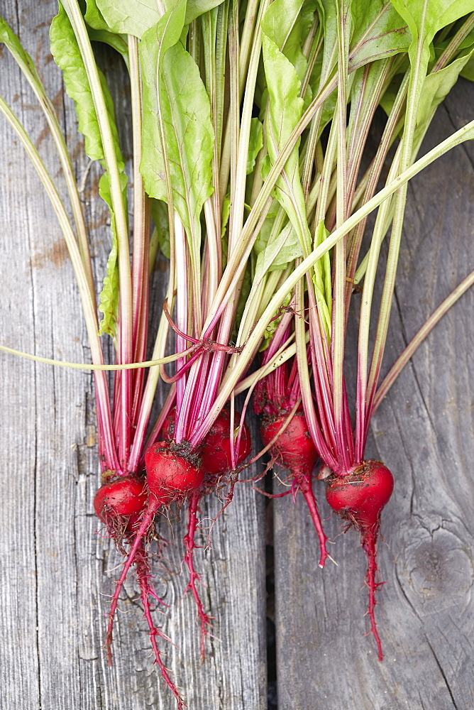 Fresh radishes with leaves on wooden table - 1178-30430
