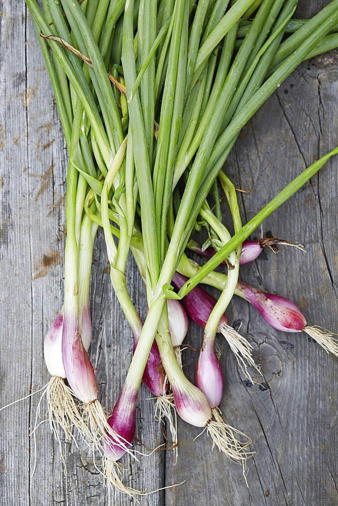 Ramps with roots and stems on wooden table - 1178-30431