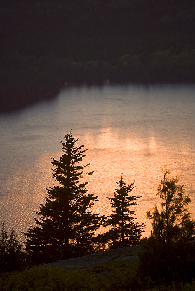 Tree and water at sunset Cadillac Mountain Maine