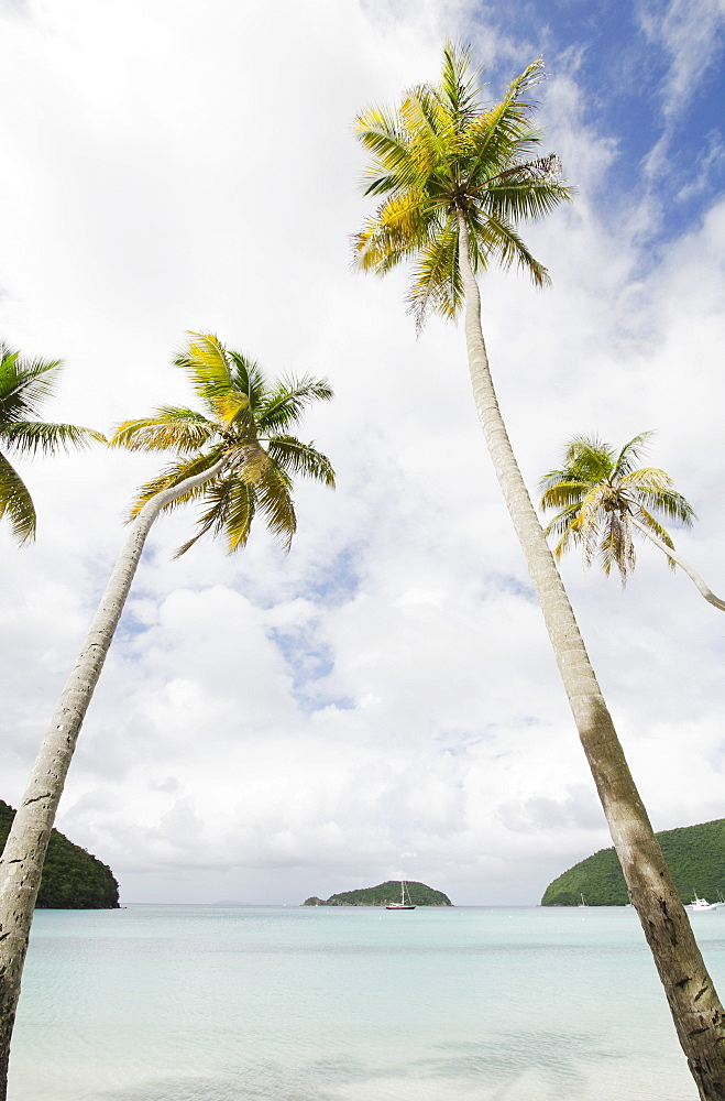 Palm trees by sea, St. John, USVI