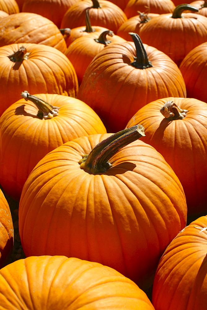 Pumpkins, full frame