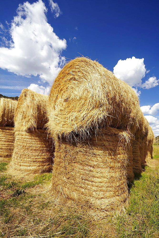 Idyllic scene of hay stacks on field, USA, Western Colorado