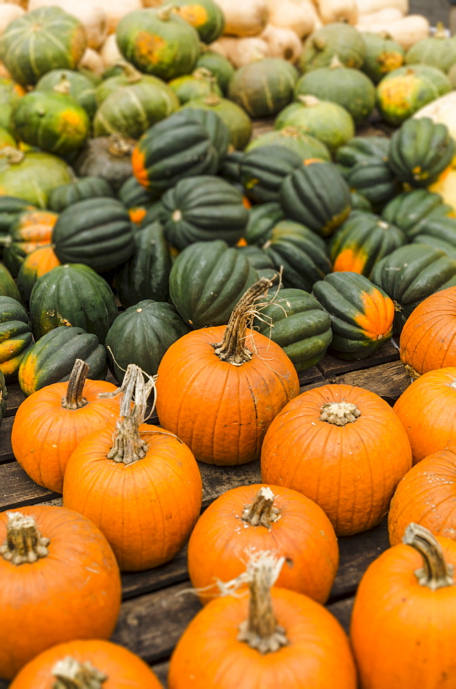 Heap of pumpkins