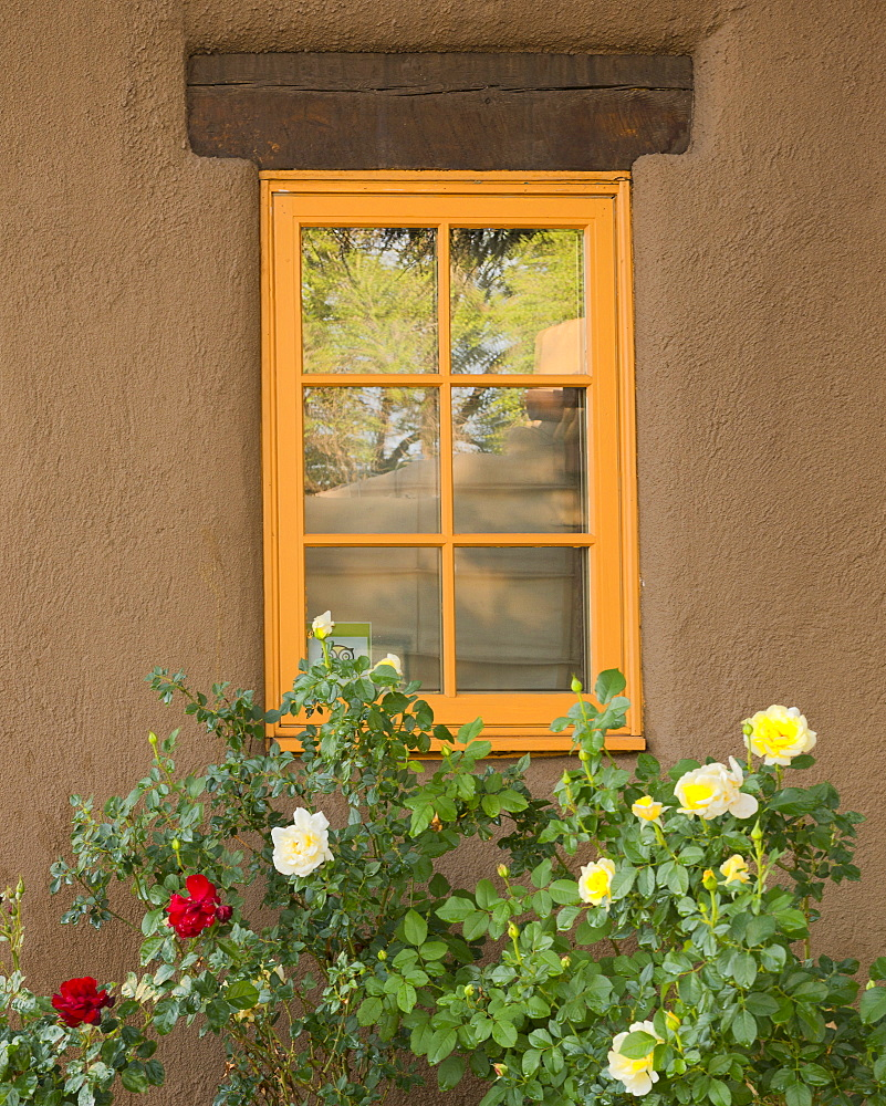 Window with roses, USA, New Mexico, Santa Fe